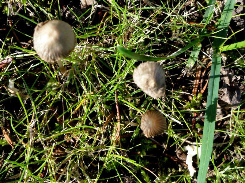 champignon-05884 (7)