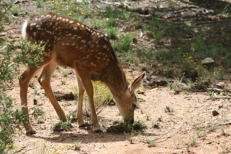 #16_Animaux Forêt