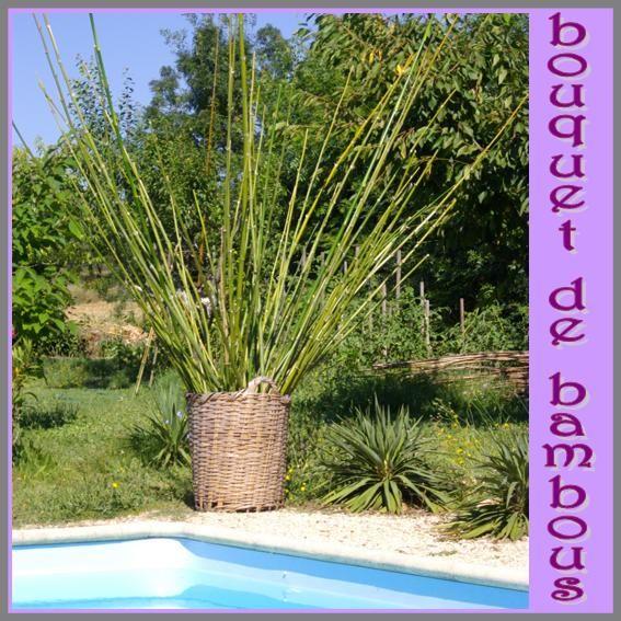 Bouquet de bambous suite mas des paillasses - Lucky bambou acheter ...