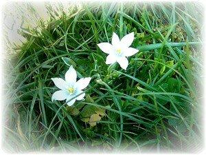 Fleurs_champs