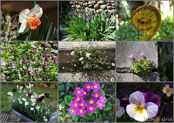 printemps 2011 au jardin pf