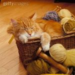 chat_tricot