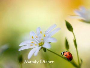 Mandy Disher