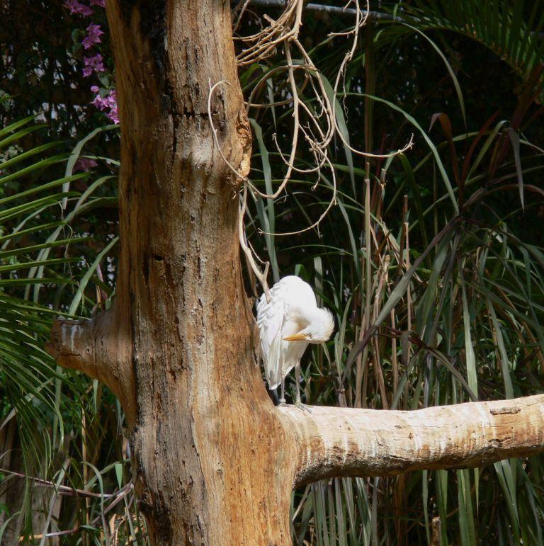 oiseau_arbre