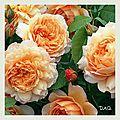 Promesse de roses et autres plantes.