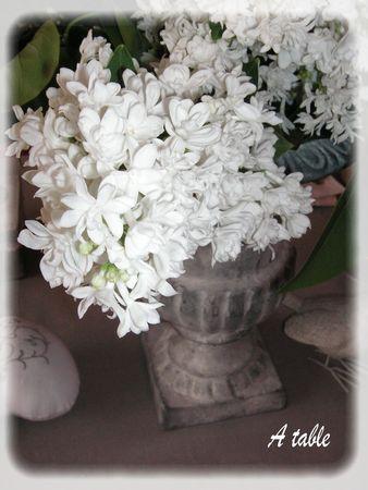 lilas_blanc_035_modifi__1