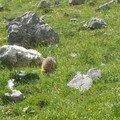J'ai vu les fesses de marmotte!