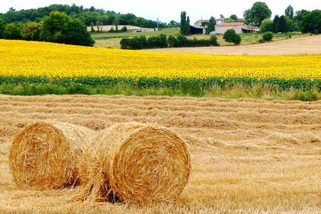 Tournesols et boules paille + ferme juillet 09