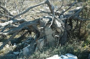 arbre arraché racines