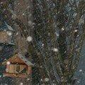 2008 04 14 Les mésanges qui mangent sous la neige qui tombe en abondance