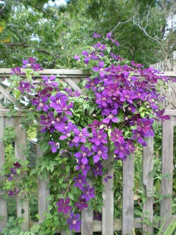violet0466487046_n