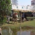 Egypt2007 116