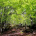 Aguas Tuertas, forêt de mai (64)