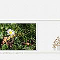 printemps en automne_02