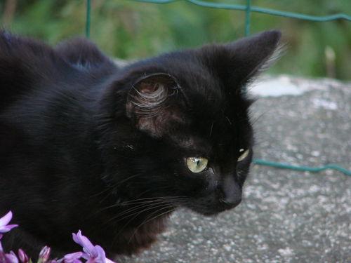 2008 09 17 Le petit chaton noir
