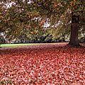 Les arbres d'automne en ville