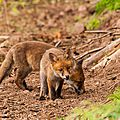 2014-05-30 LUX-0948