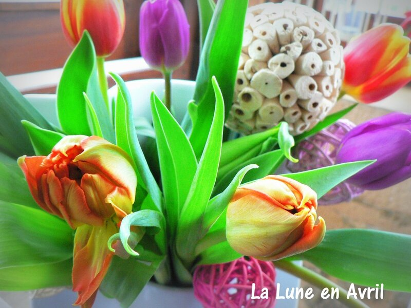 Tulipes avril 2016 2