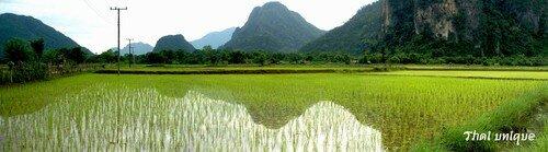 reflets rizière