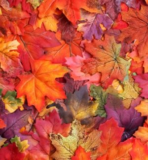 20090416_autumn_leaves