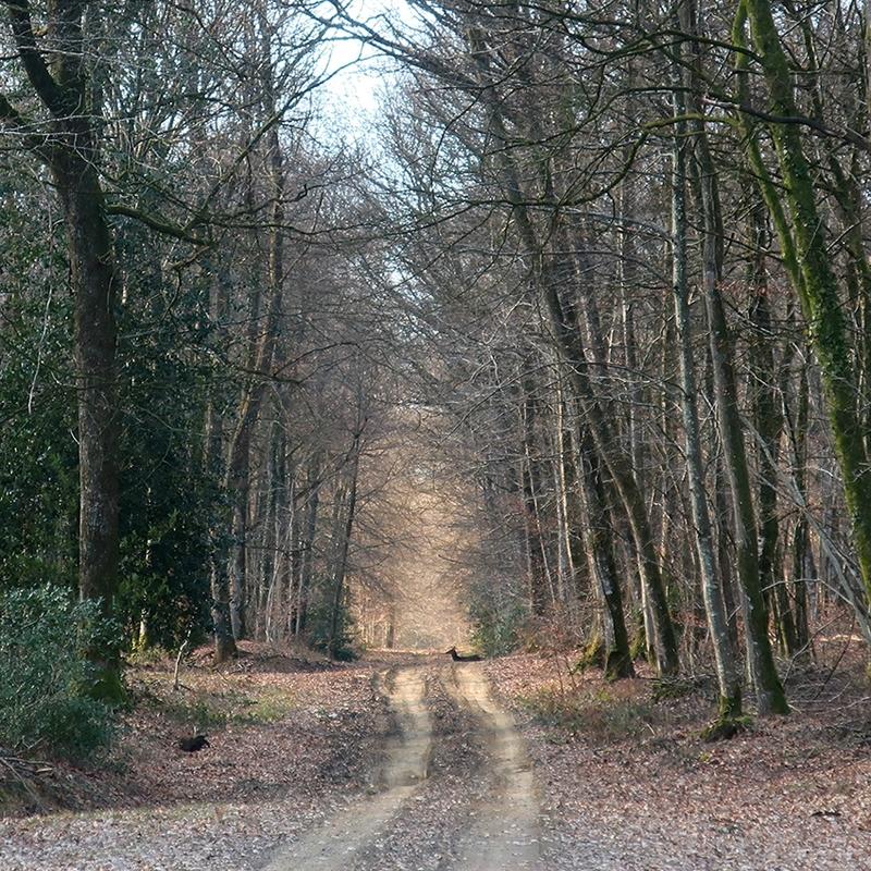 forêt 26 a