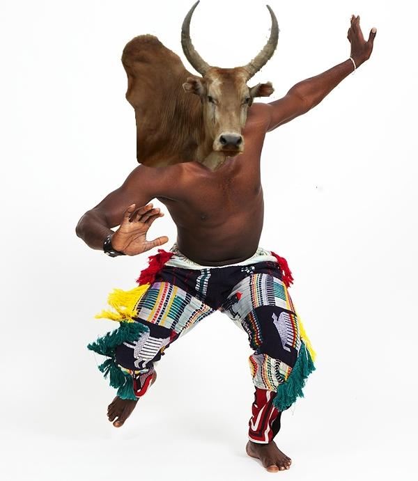 DDS 493 danseur zébu