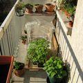 Le balcon au soleil !