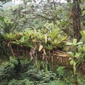rainforest3