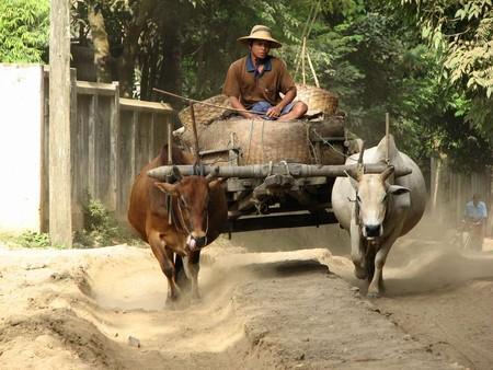Birman_100___22_