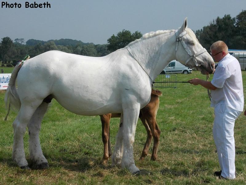 SIDONA de Nielles - Concours National - Samer (62) - 27 juillet 2014 - 8e (poulinières suitées de 8 à 10 ans)