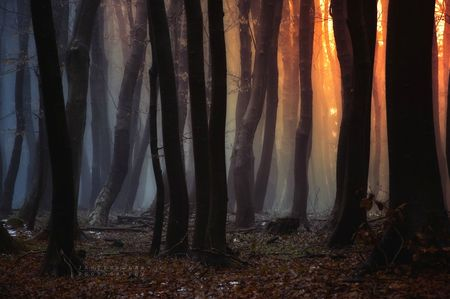 _forgotten_song_of_autumn__by_janek_sedlar-d5t16nf