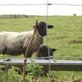 28 - Irlande mai 2006