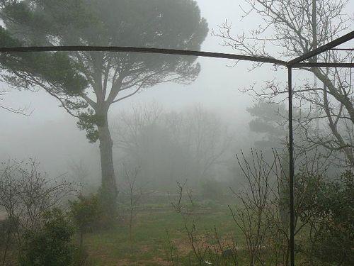Brouillard sur le jardin 12/09