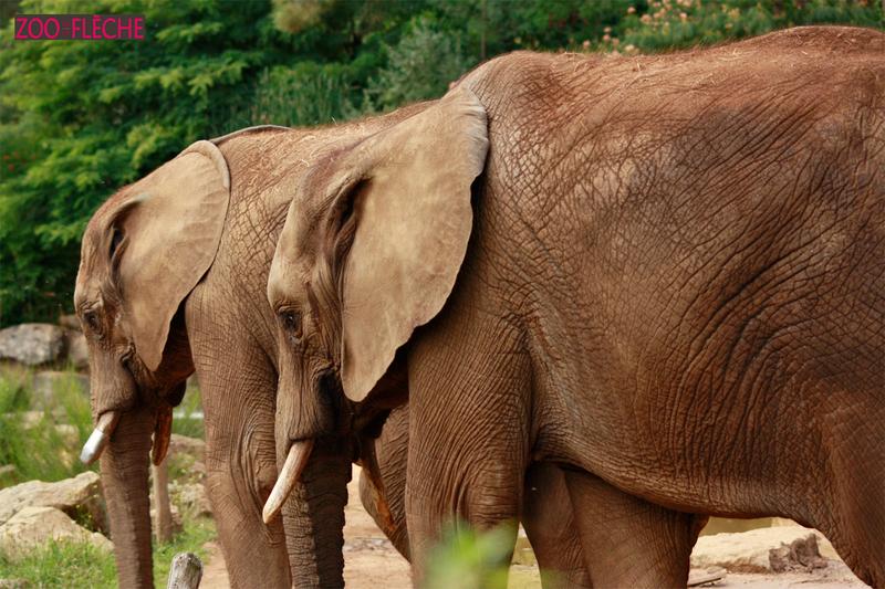 Elephant-(15)HR