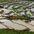 trek réserve pu luong_47