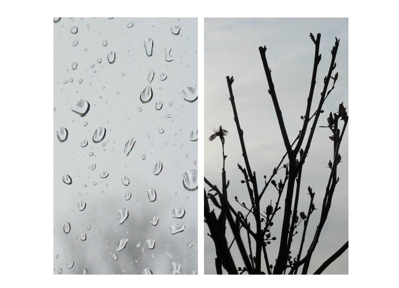 16-03-24, Arbres_pluie (0)