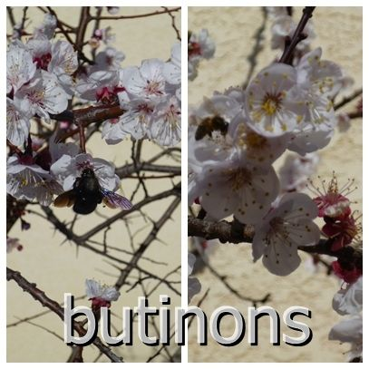 butinons