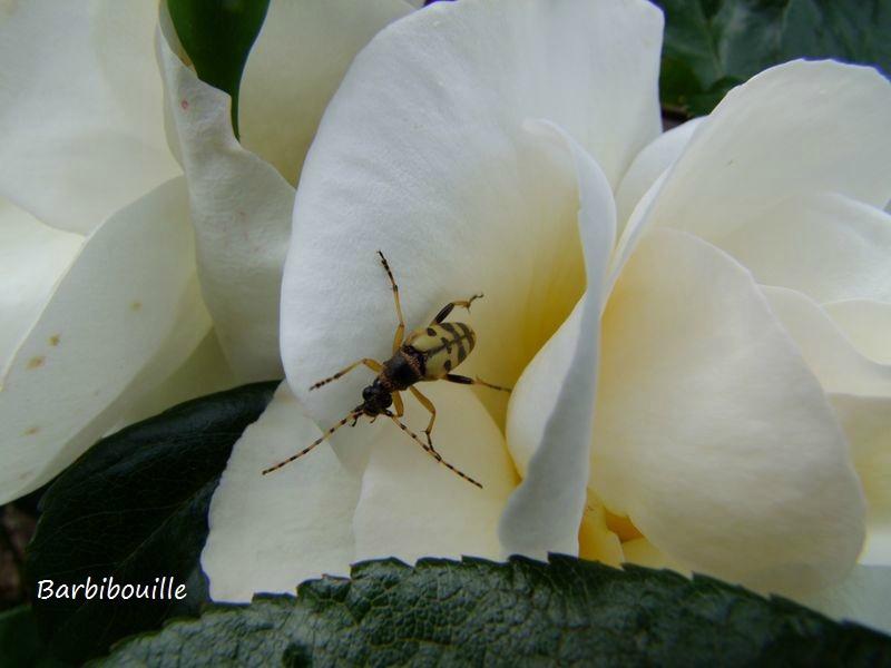 insecte29 Mai14