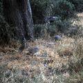 samburu ecureuil