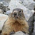 14 Mes petites marmottes