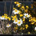 Fleurs sauvages au bord de l'étang du bouchat