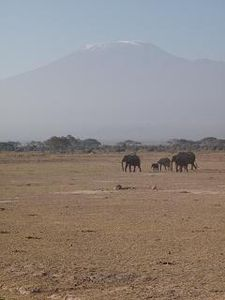 Kili_et_elephants