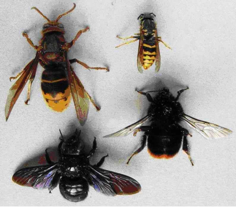 De l'abeille au miel