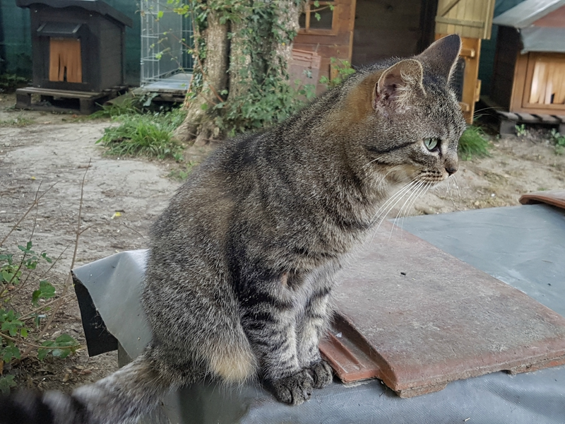 chats de l'enclos 95