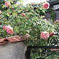 2013 rosier anglais