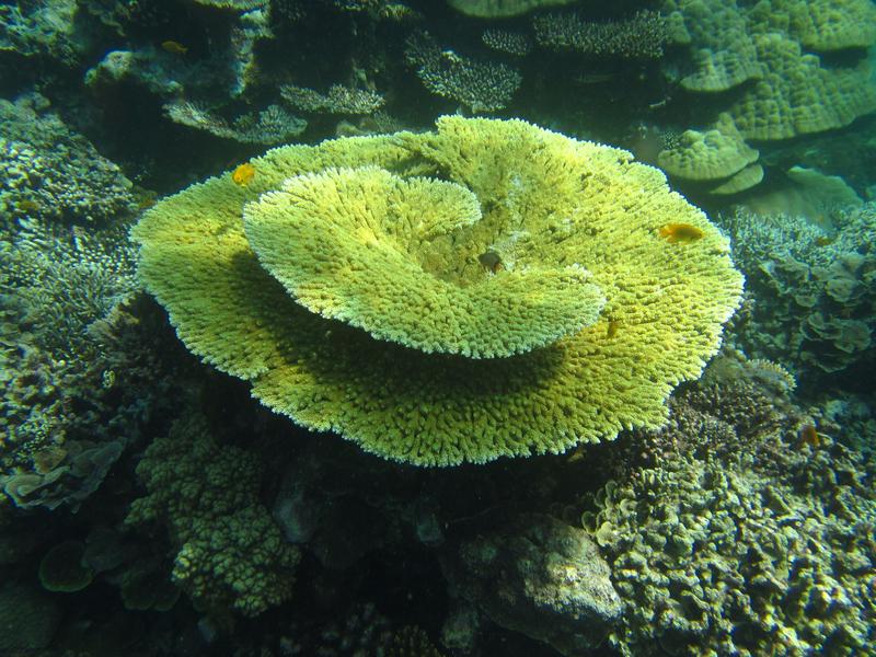 corail de M'tsanga Fanu