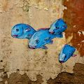 fresque poissons bleus, puerto angel, mexique