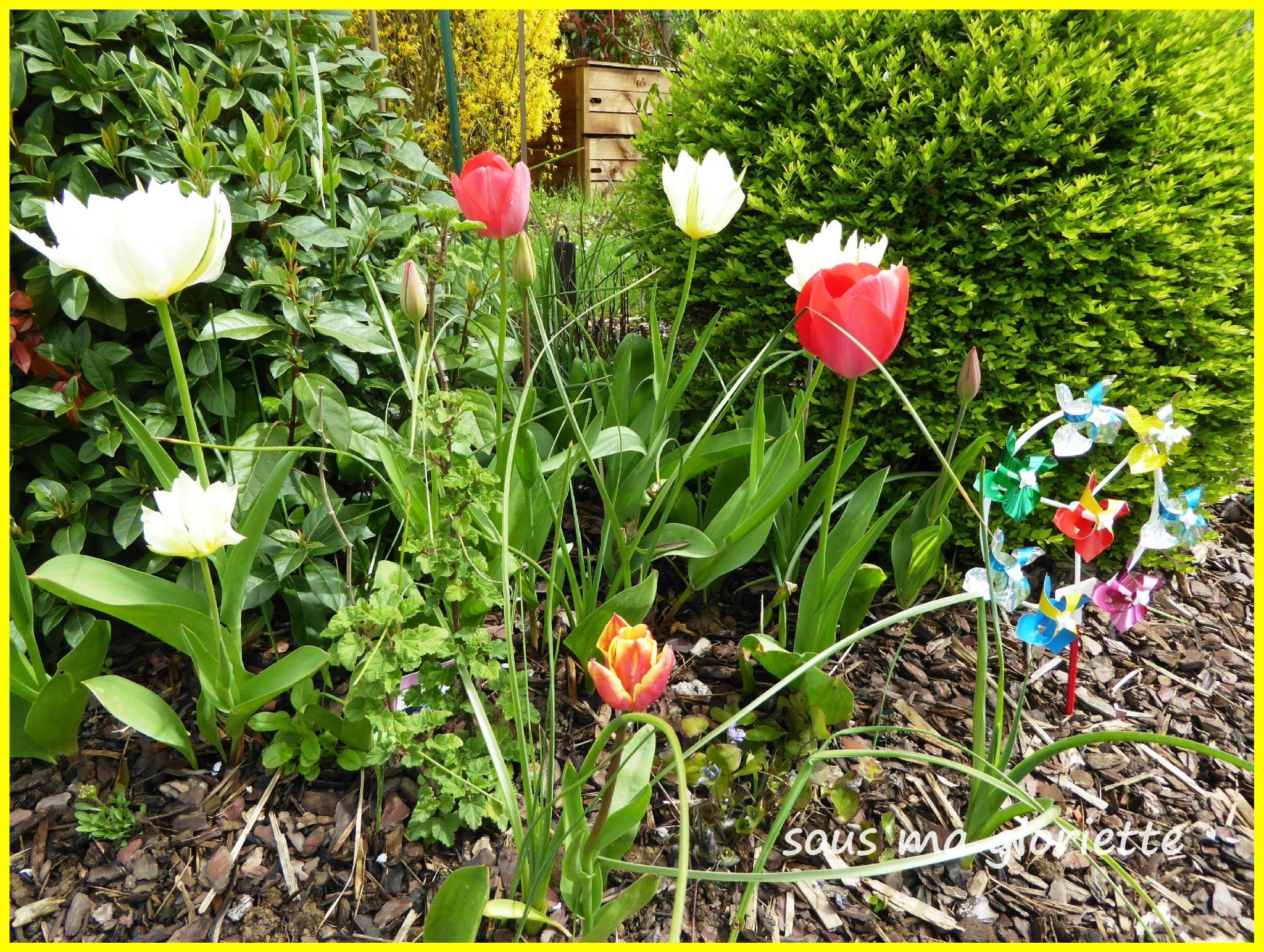 Printemps au jardin sous ma gloriette for Au jardin des sans pourquoi