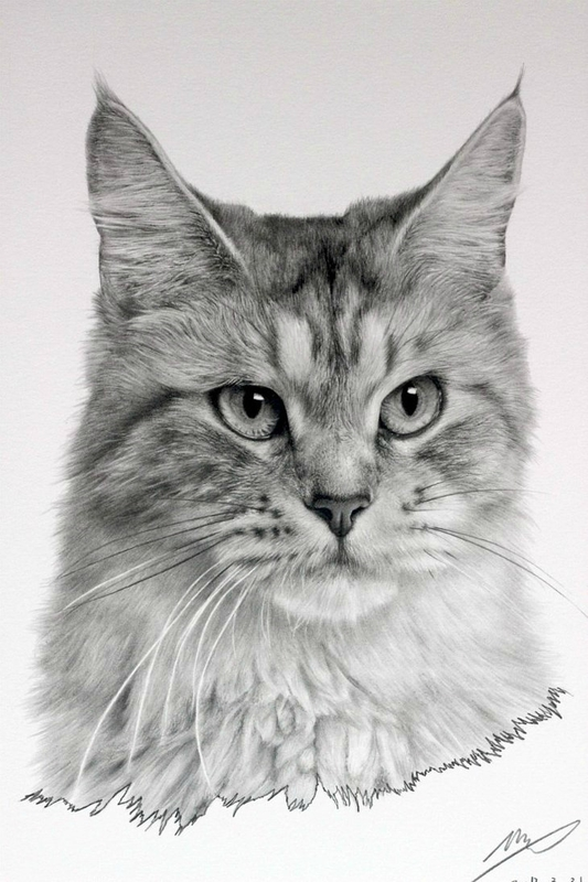 cat_drawing_by_sharppower-d4ukz3d