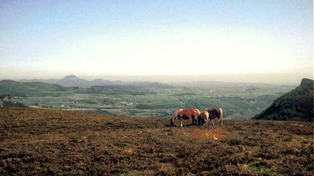 chevaux_au_Sancy